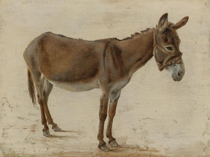 Parshat Sh'mot, 5780 – In Praise of Donkeys